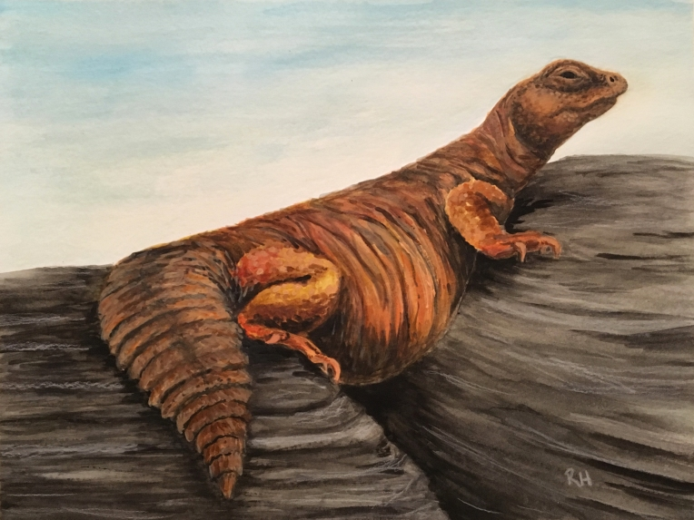 Liz-Lemon-Uromastyx-watercolor-Jan2018